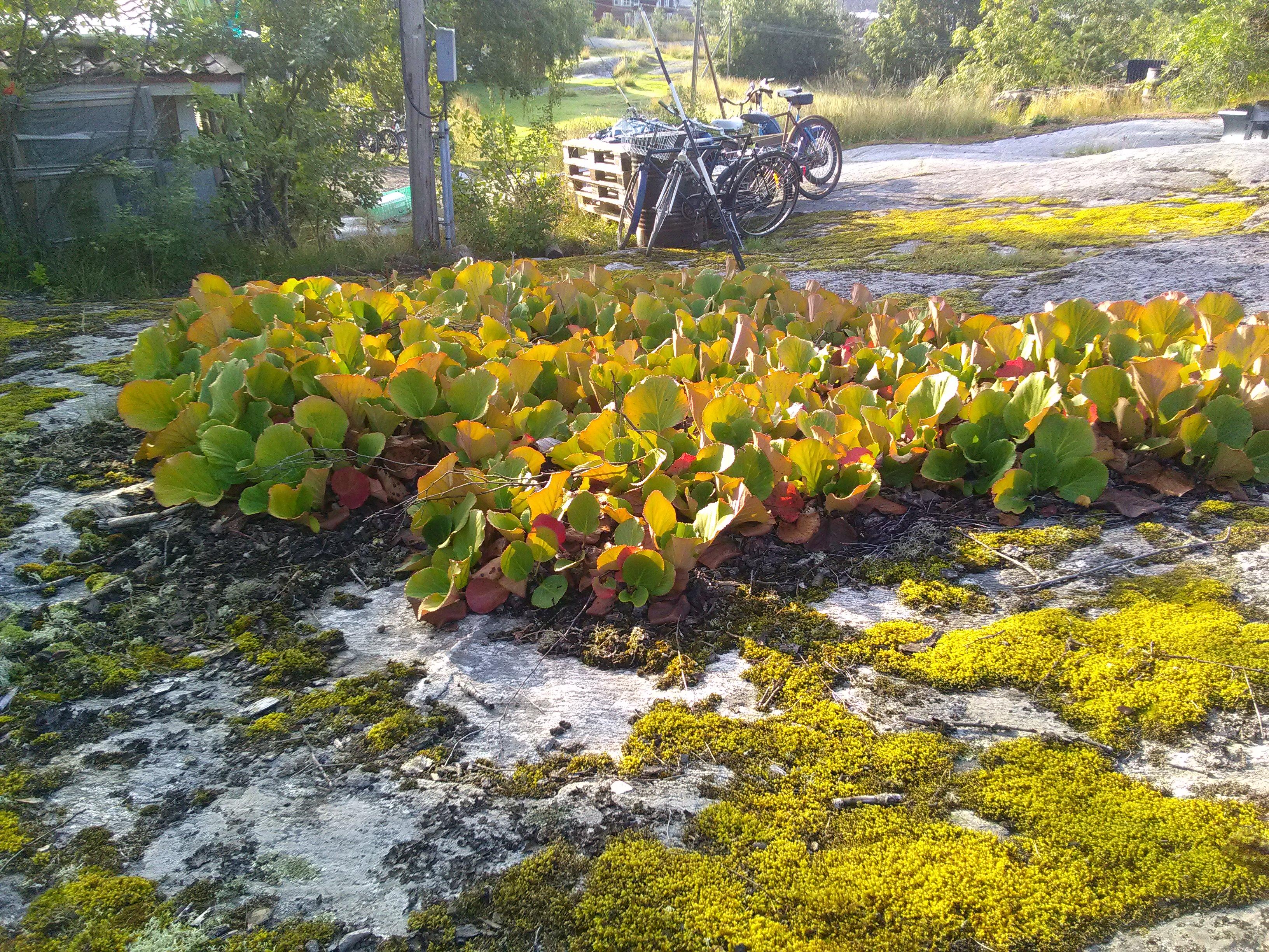 rotsbeplanting