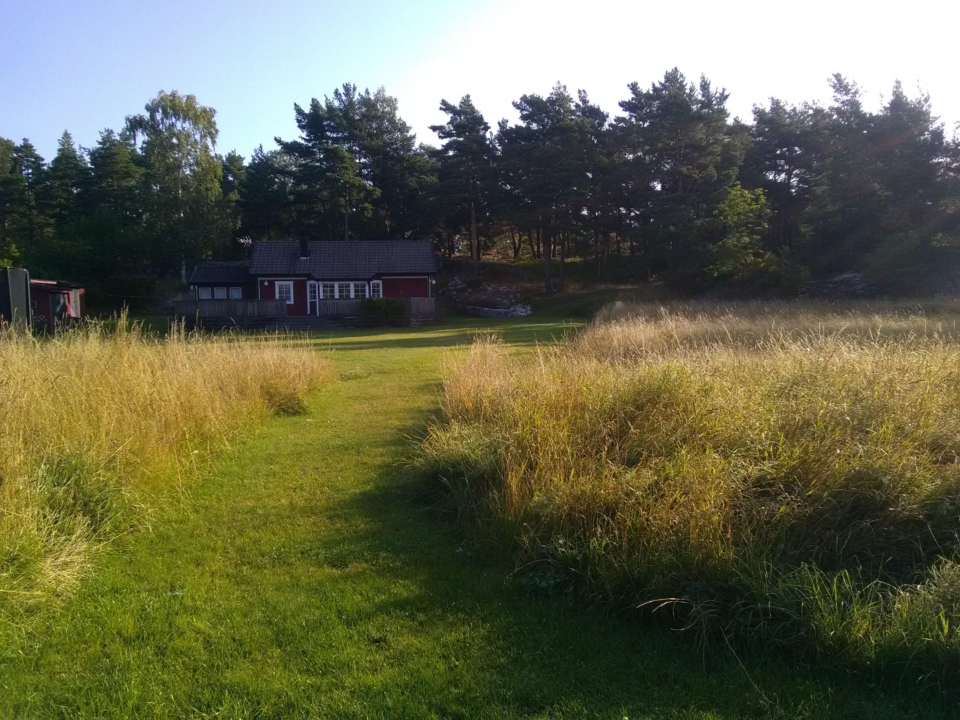 natuurlijke tuin, zadenmengsel, hooiland